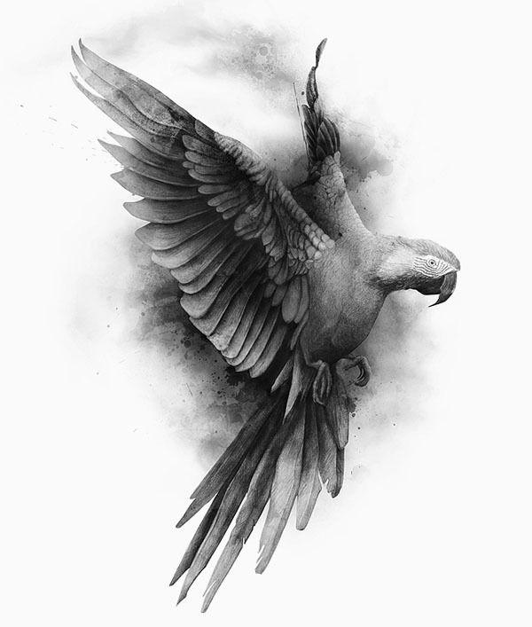Dibujos De Aves Bird Drawings Beautiful Pencil Drawings Bird Art