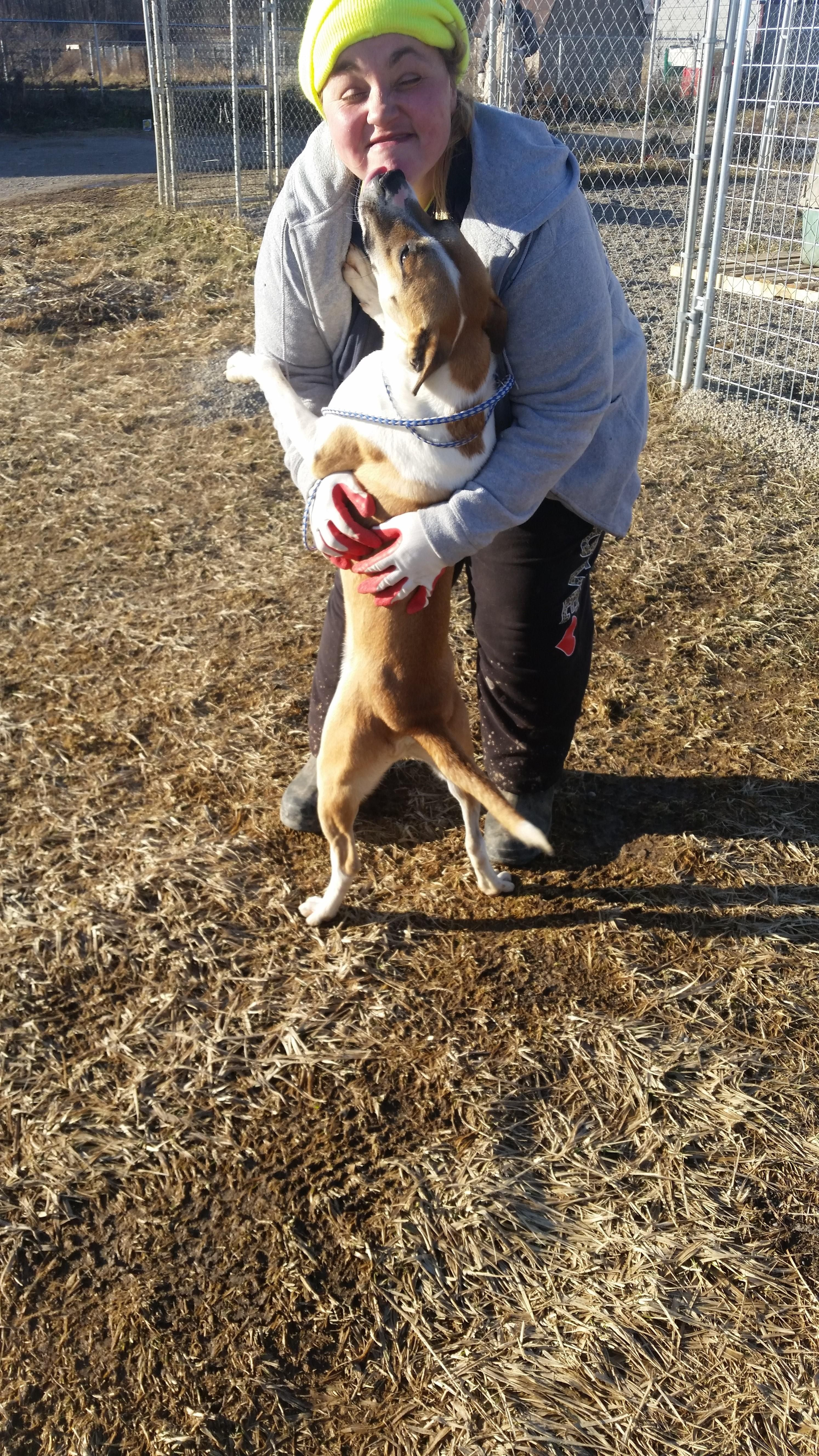 Whippet Puppies For Sale In Ga
