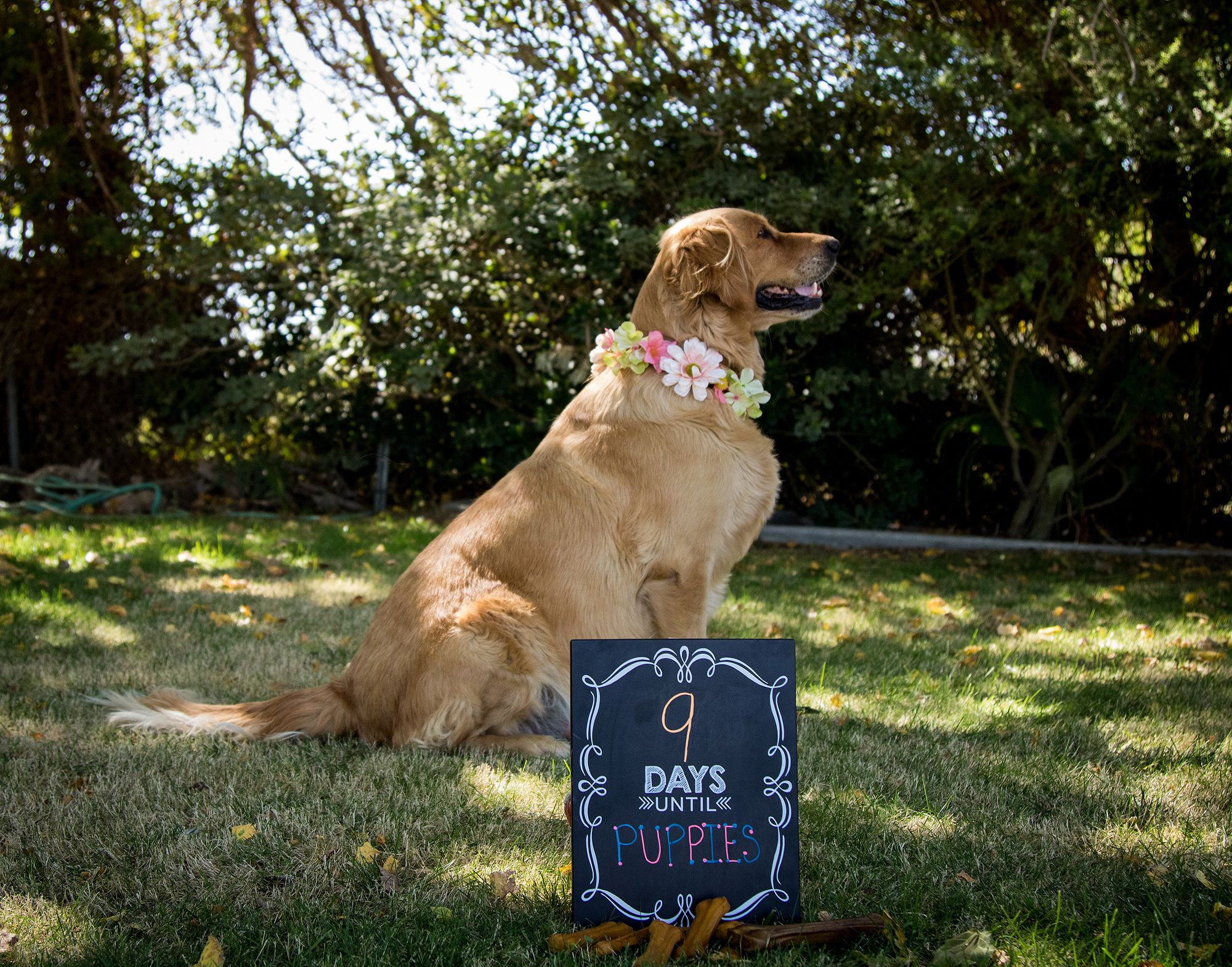 Oh Fur Baby Adorable Dog Parents Pose For Maternity Shoot