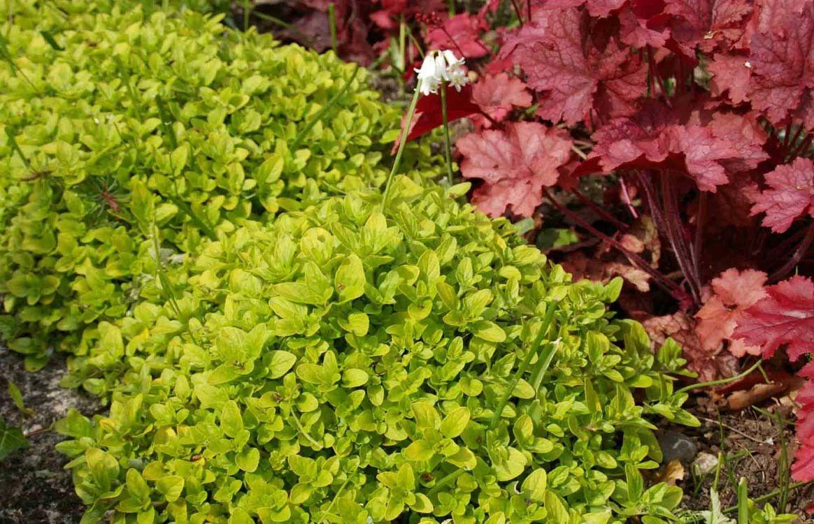 Каталог многолетних цветов для дачи: фото с названиями растений 45