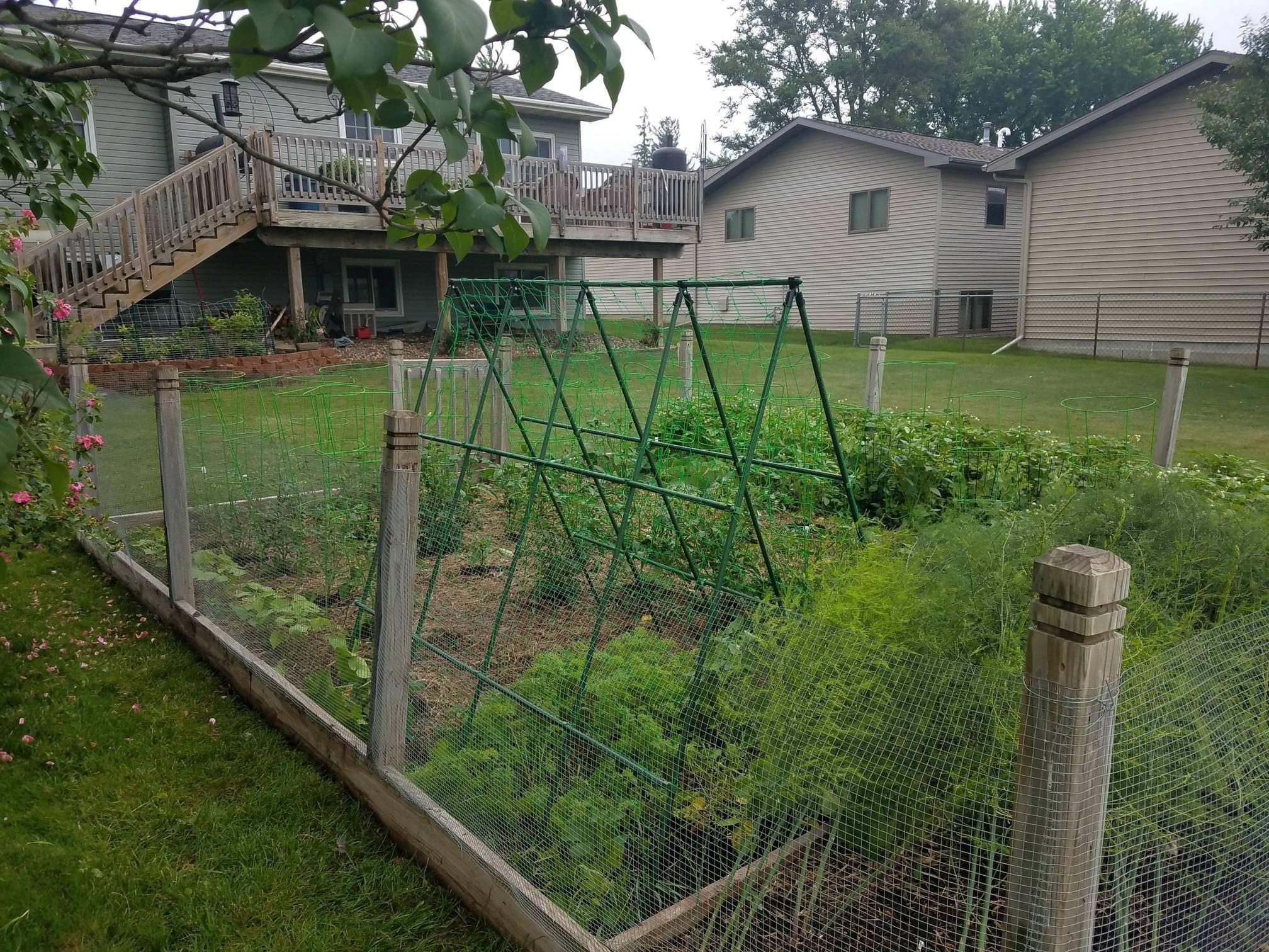 Put In The Trellis For My Acorn Squash Gardening Garden Diy