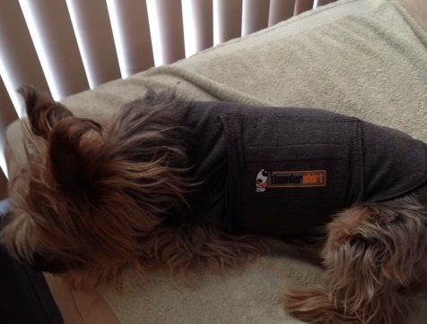 The #Thundershirt works! My nephew is now cool, calm and collected:)