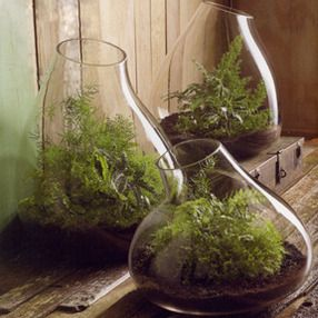 Roost recycled glass bubble terrariums