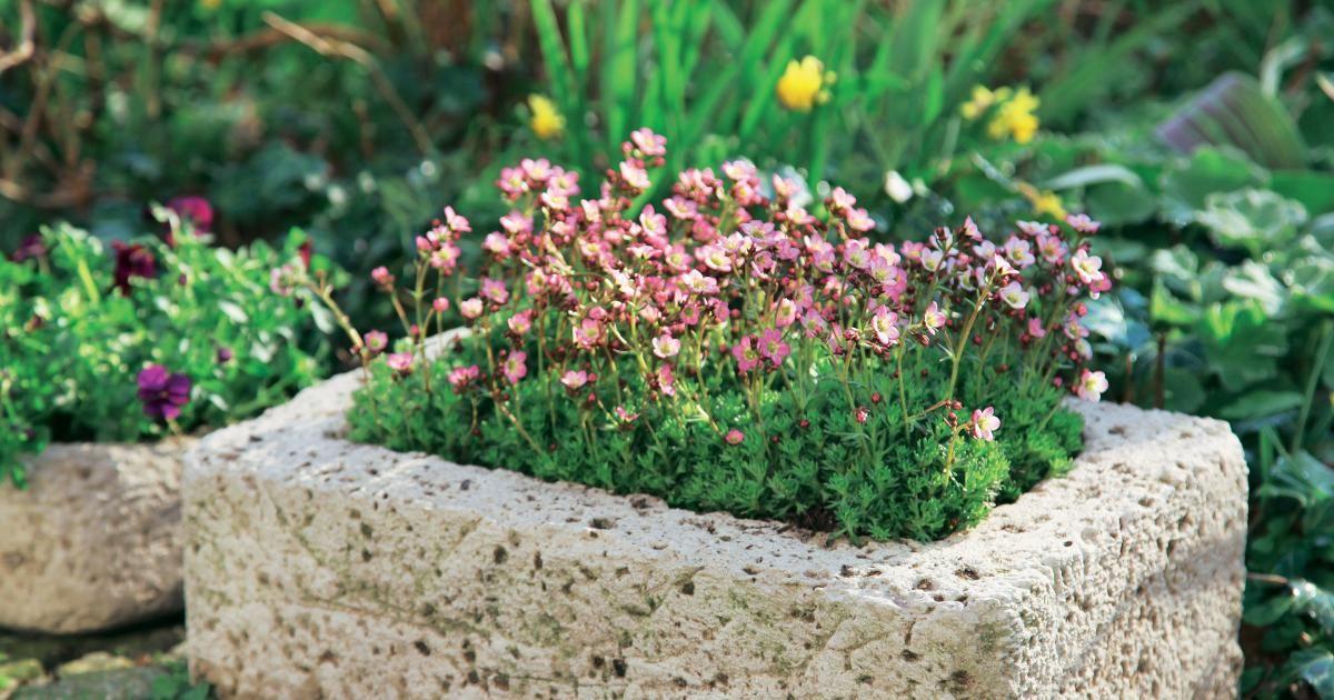 Pflanzgefäße aus Beton selber machen Verwechselt, Sandstein und