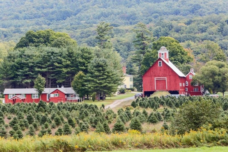 christmas tree farm farmhouse in vermont for sale - Christmas Tree Farms For Sale