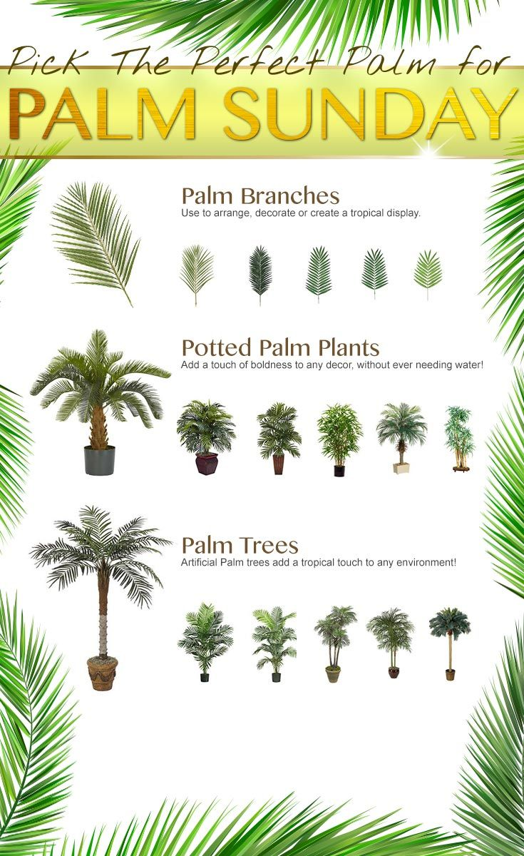 Set Of Coconut Palm Trees Cocos Nucifera Coconut Palm Coconut Palm Tree Palm Trees
