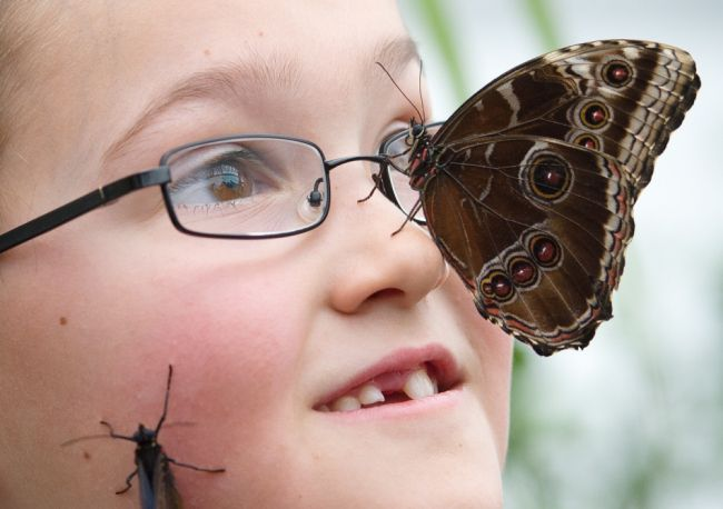 Sensational Butterflies' exhibition at the Nautral History Museum in central London, on March 25, 2013 (Getty Images)