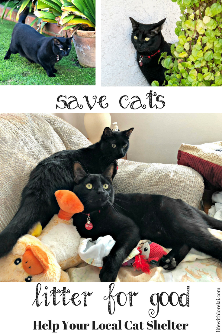 Help Save Cats In Animal Shelters Cats Animal Shelter Cat Shelter