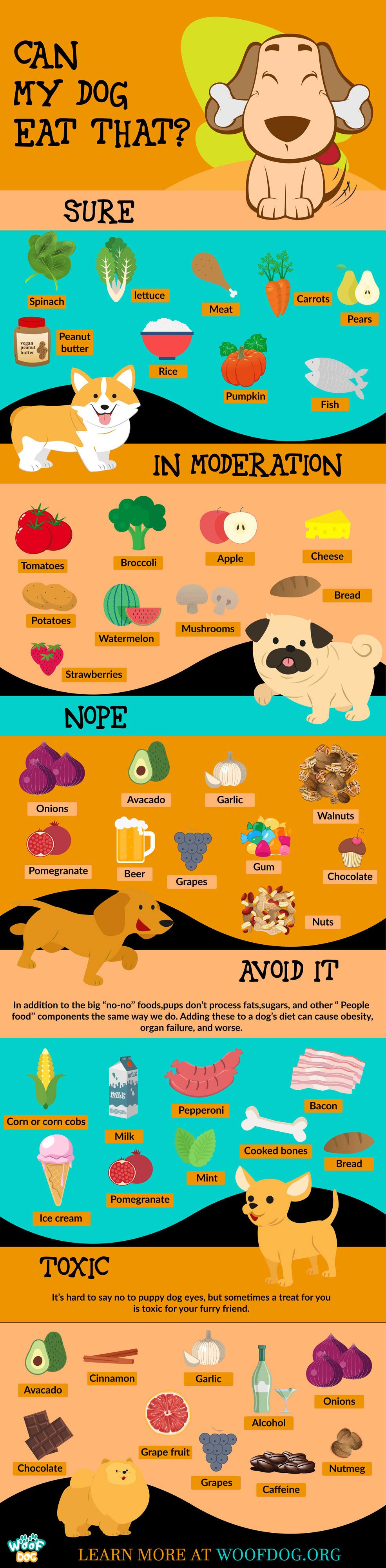 Can my dog eat that? Human foods your dog can eat and 11