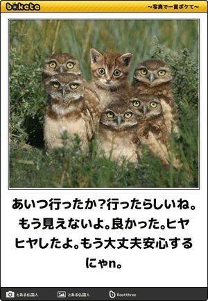 107 Quora 動物おもしろ画像 おもしろ猫画像 面白いペット