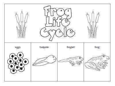 frog life cycle worksheet for kindergarten Google Search