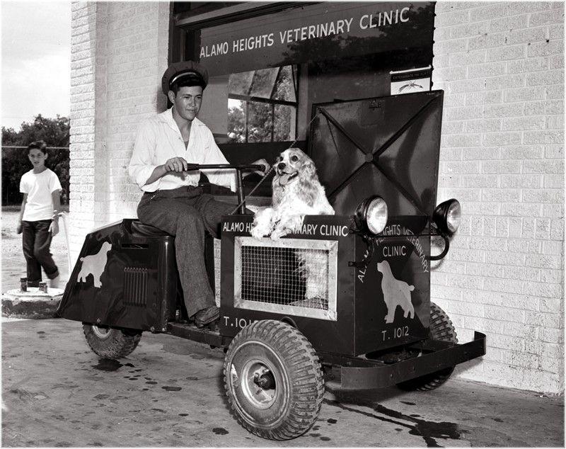 Alamo Heights Vet Clinic. 3 wheel vehicle, mobile vet pick