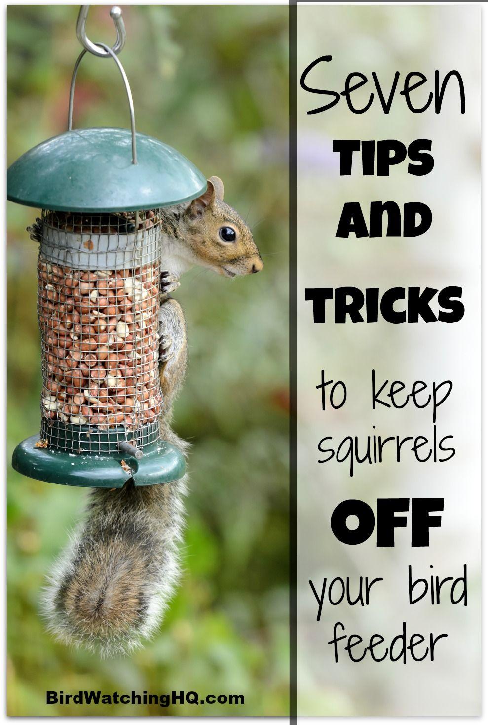 8 proven ways to keep squirrels off bird feeders 2021