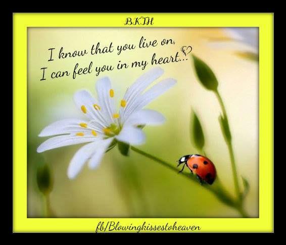 Ladybug From Heaven Our Ladybugs From Heaven Pinterest Ladybug
