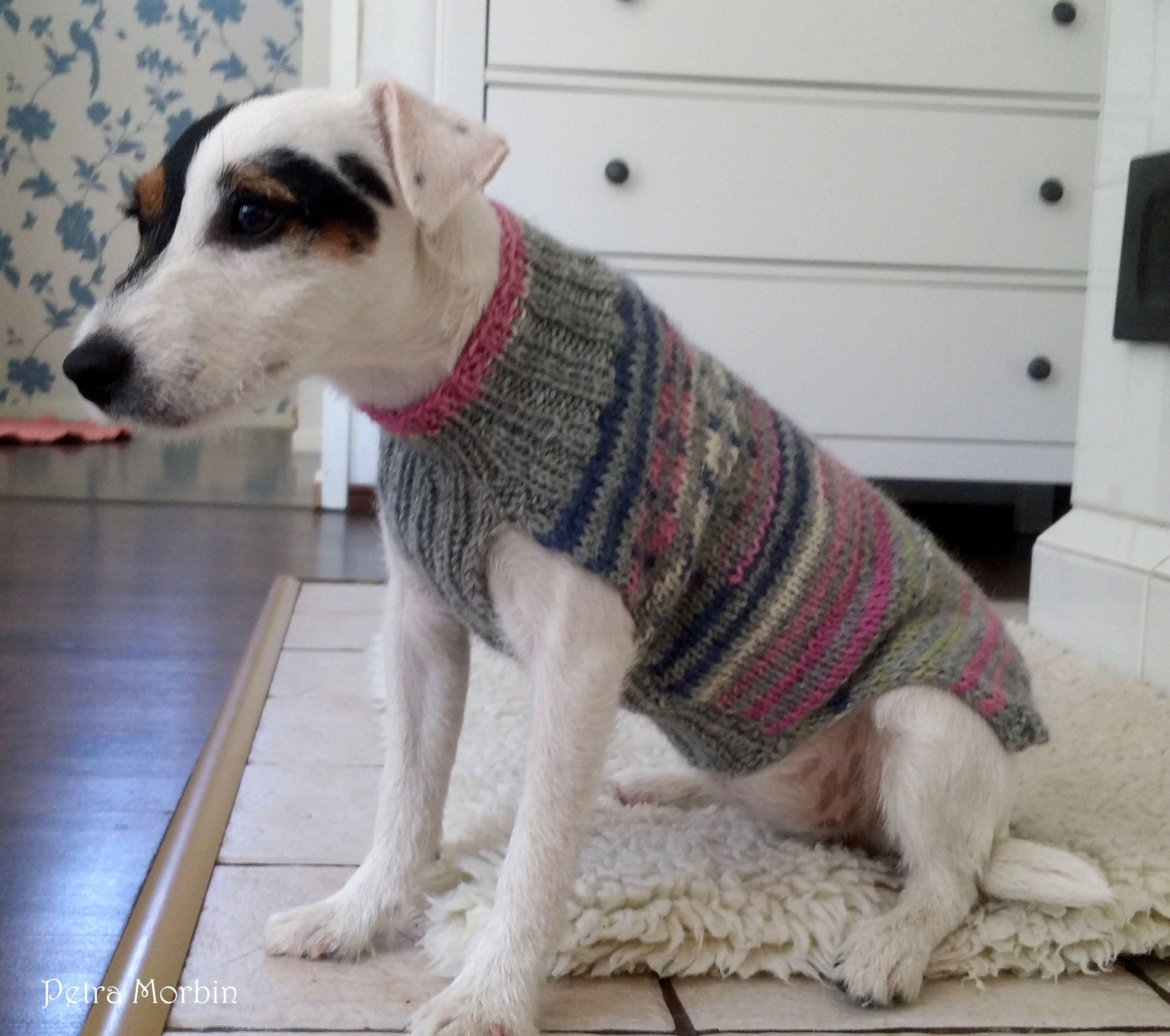 Koiran Villapaidan Kutomisohje With Images Koiran Vaatteita Koira Lemmikkielaimet