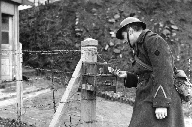 A French soldier uses a caged bird to detect gas on the Maginot Line 15th December 1939 #war #ww2