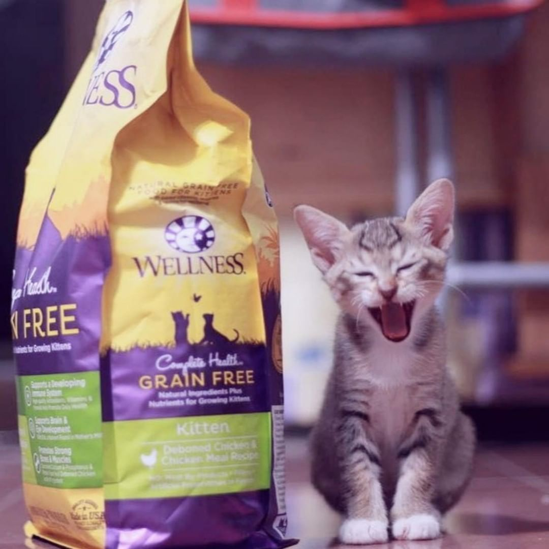 Ha You Forgot That You Already Fed Me This Morning Ma I M Not Telling Though I Love My Wellness Grain Free Kitten Food Wellness Cat Food Wellness Pet Food