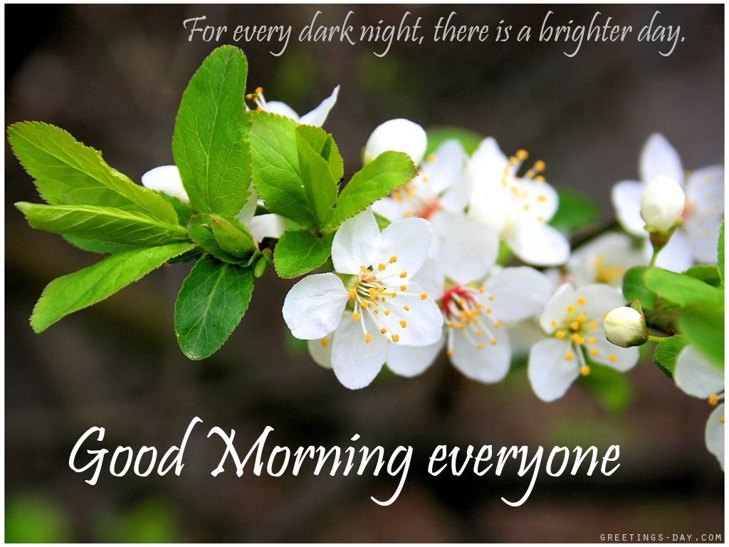 Good Morning Everyone Band : Good morning everyone quotes