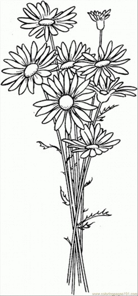 Daisy Flower Drawing Simple Daisy Drawing | Free Flower Templates ...