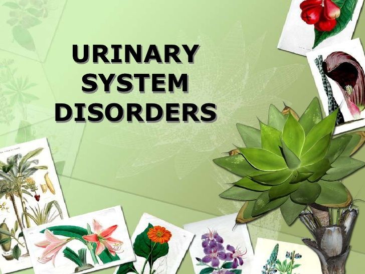 English Essay Papers Urinary System Disorders Writing Assessment Essay Writing Persuasive  Essays Start Writing Curriculum English 101 Essay also Essay Samples For High School Students Urinary System Disorders  Preventive Care  Plants Horticulture  Apa Format Essay Paper