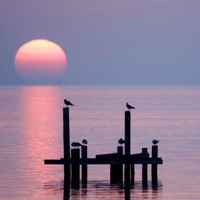 birds on posts at sunset