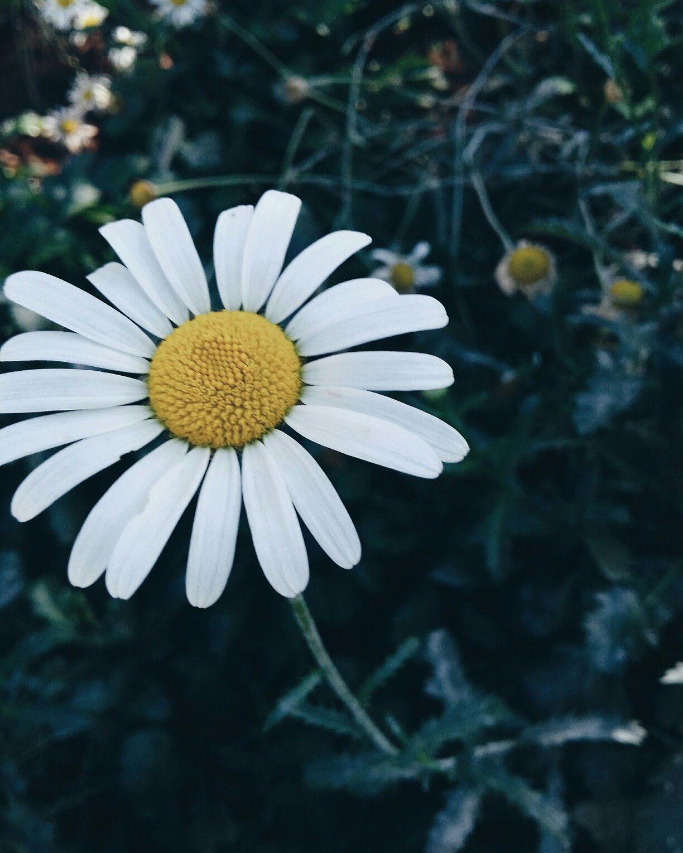 Flower Tumblr Flowers Green Inspiration Flor Flores Verde