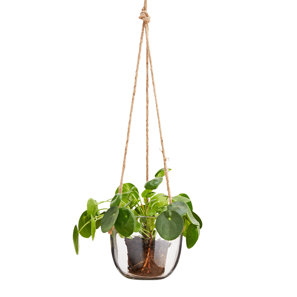 Hanging Gl Plant Pot