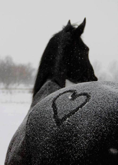 Falling Snow
