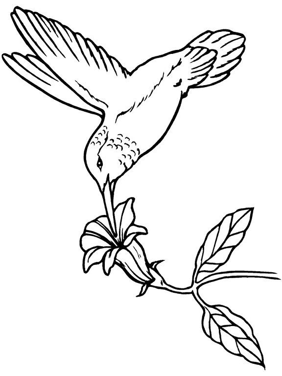 Hummingbird Coloring Book Page. This Hummingbird Is Drinking From A  Tropical Flower. You Will Find A Lot More Birds Coloring Pages In The  Gallery.