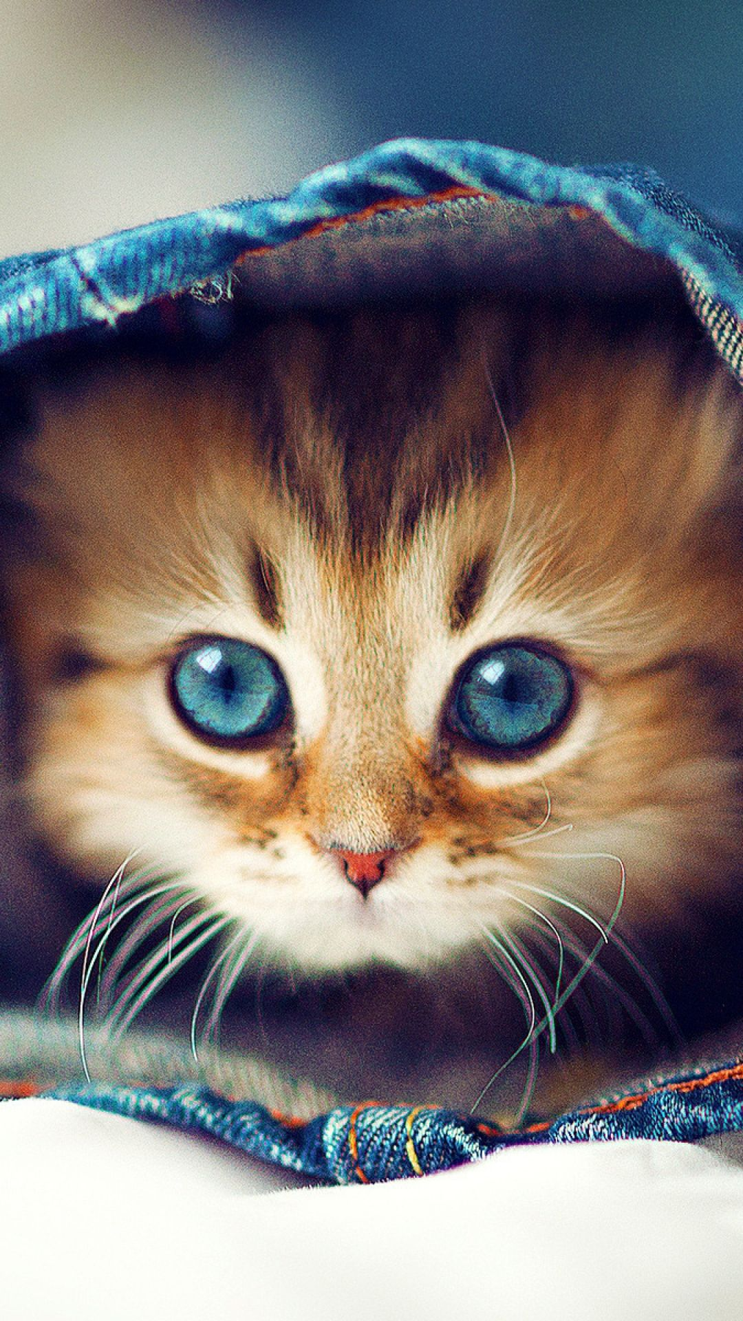 Kitty jeans face furry hide moixets pinterest kitty and face