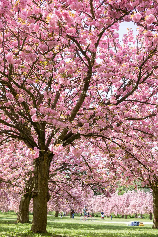 Pin By Patricia Sroka On Spring Pink Blossom Tree Blossom Garden Tree Photography