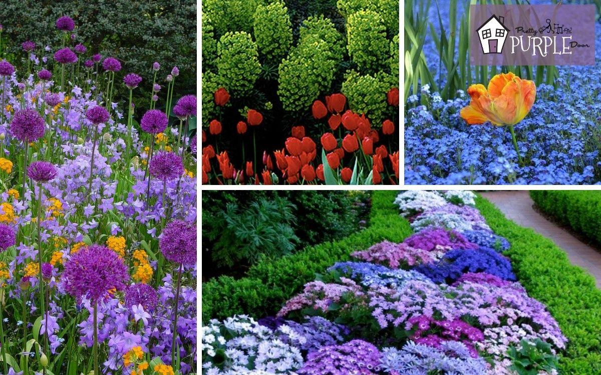 How To Create Gorgeous Garden Color Schemes Colorful Garden