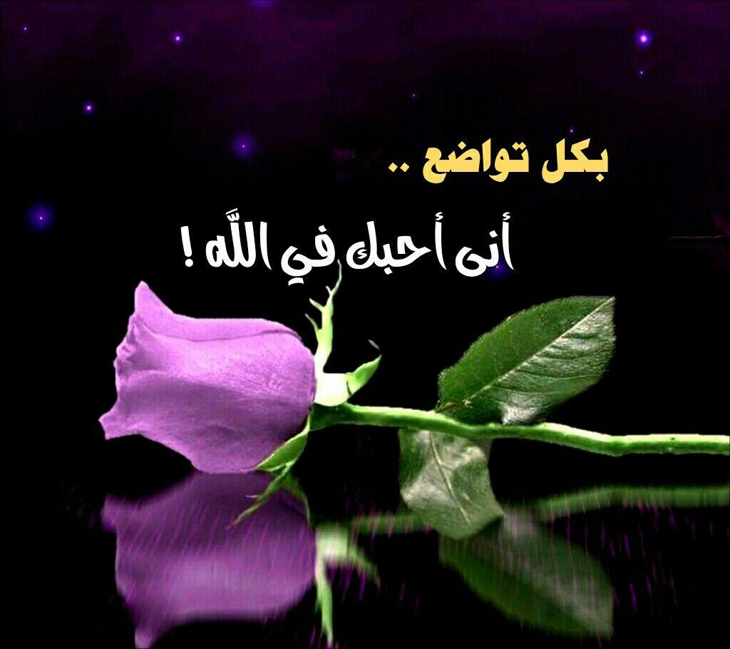 بكل تواضع أنى أحبك في الله Purple Roses Rose Pictures Beautiful Flowers