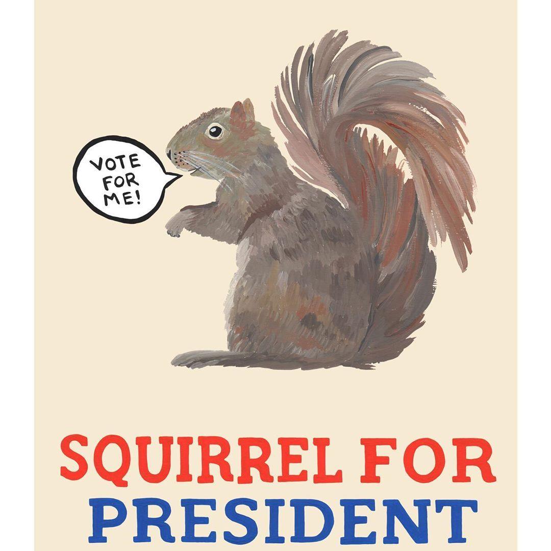 Pin On Squirrel Amp Chipmunk