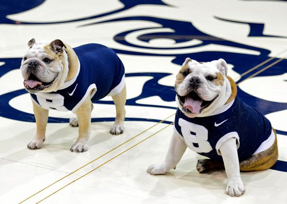 The Elite 8 Our Favorite Ncaa Animal Mascots Bulldog Images