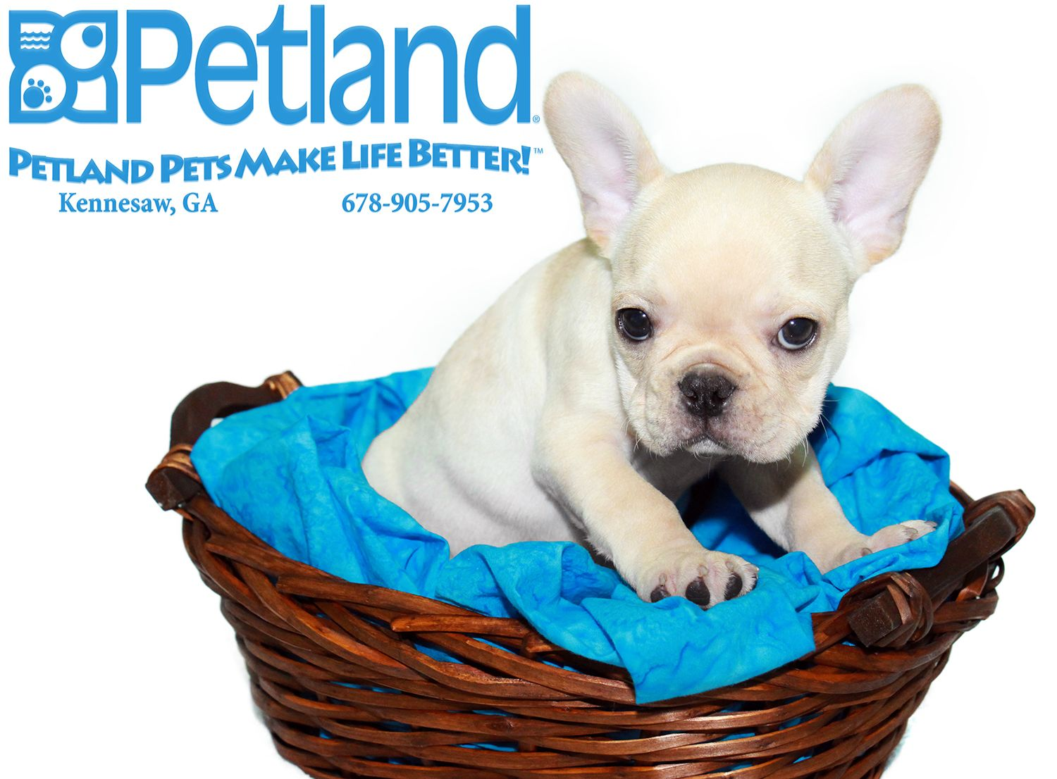 Dogs Puppies For Sale With Images Puppies Pets Dog Adoption
