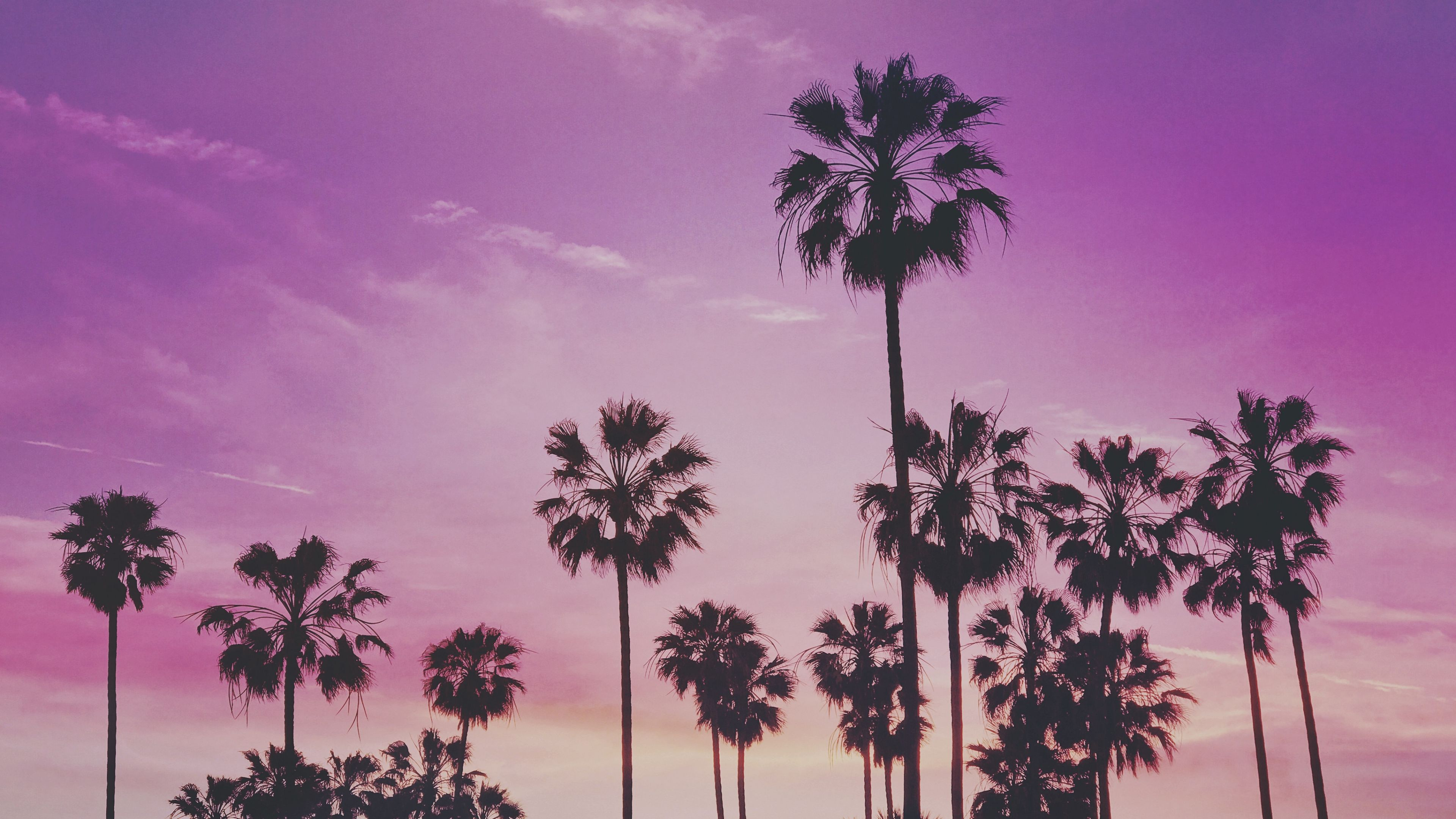 Palms Trees Sunset Is A Hd Wallpaper Posted In Nature Category You Can Download Palms Trees Sunset Hd Wallpaper In Palm Tree Sunset Sunset Wallpaper Wallpaper