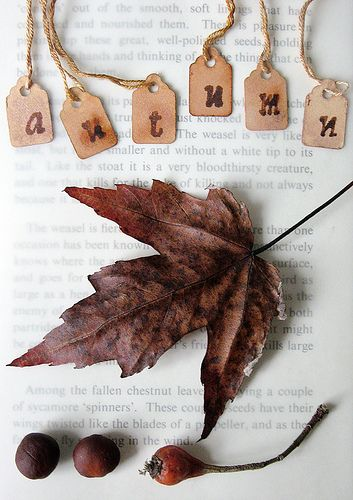 autumn browns   Flickr - Photo Sharing!