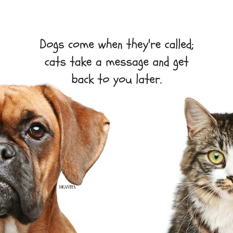 Funny Cat And Dog Pictures With Quotes