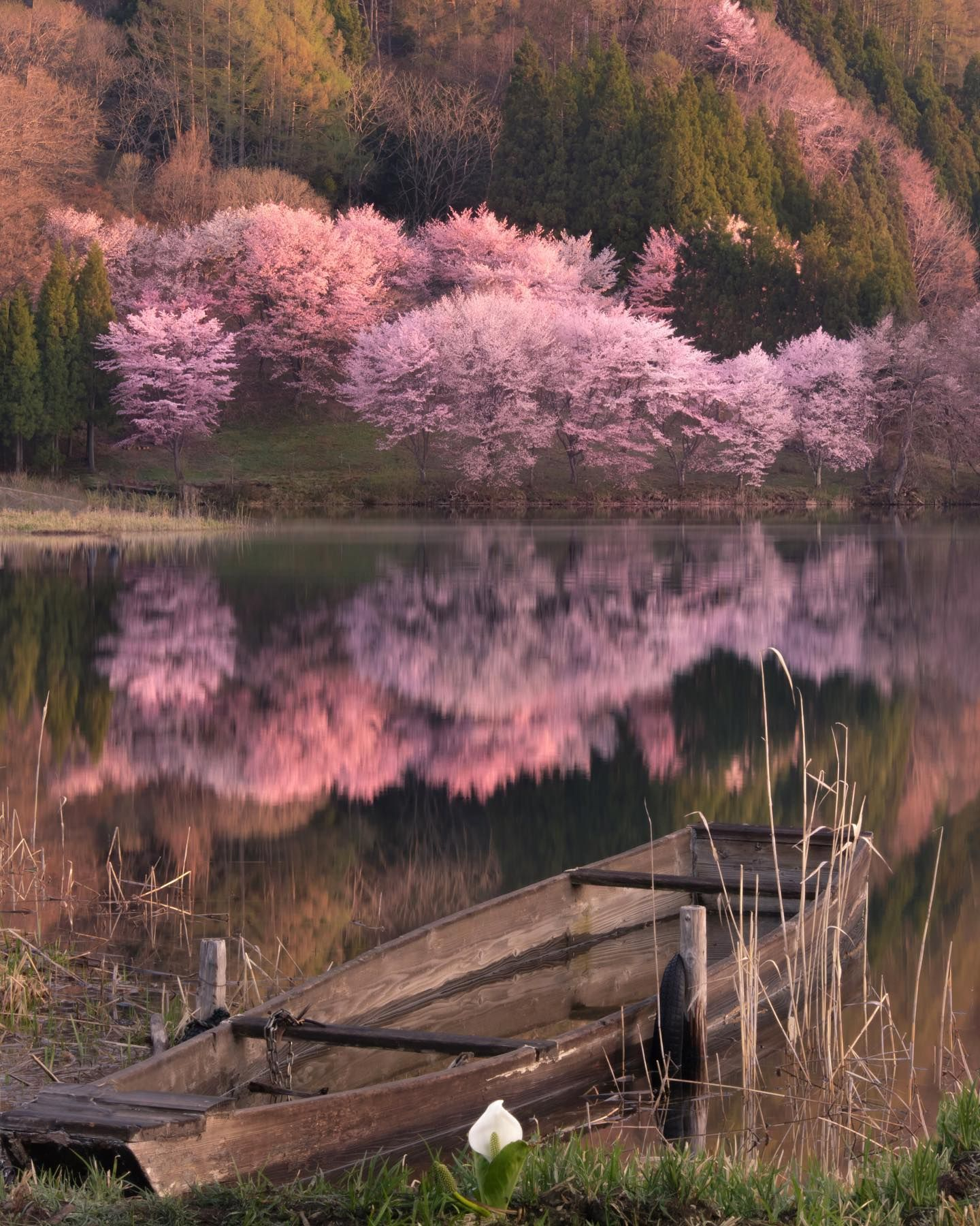 Amazing Nature Photography In Japan By Makiko Samejima Amazing Nature Photography Photography Inspiration Nature Amazing Nature