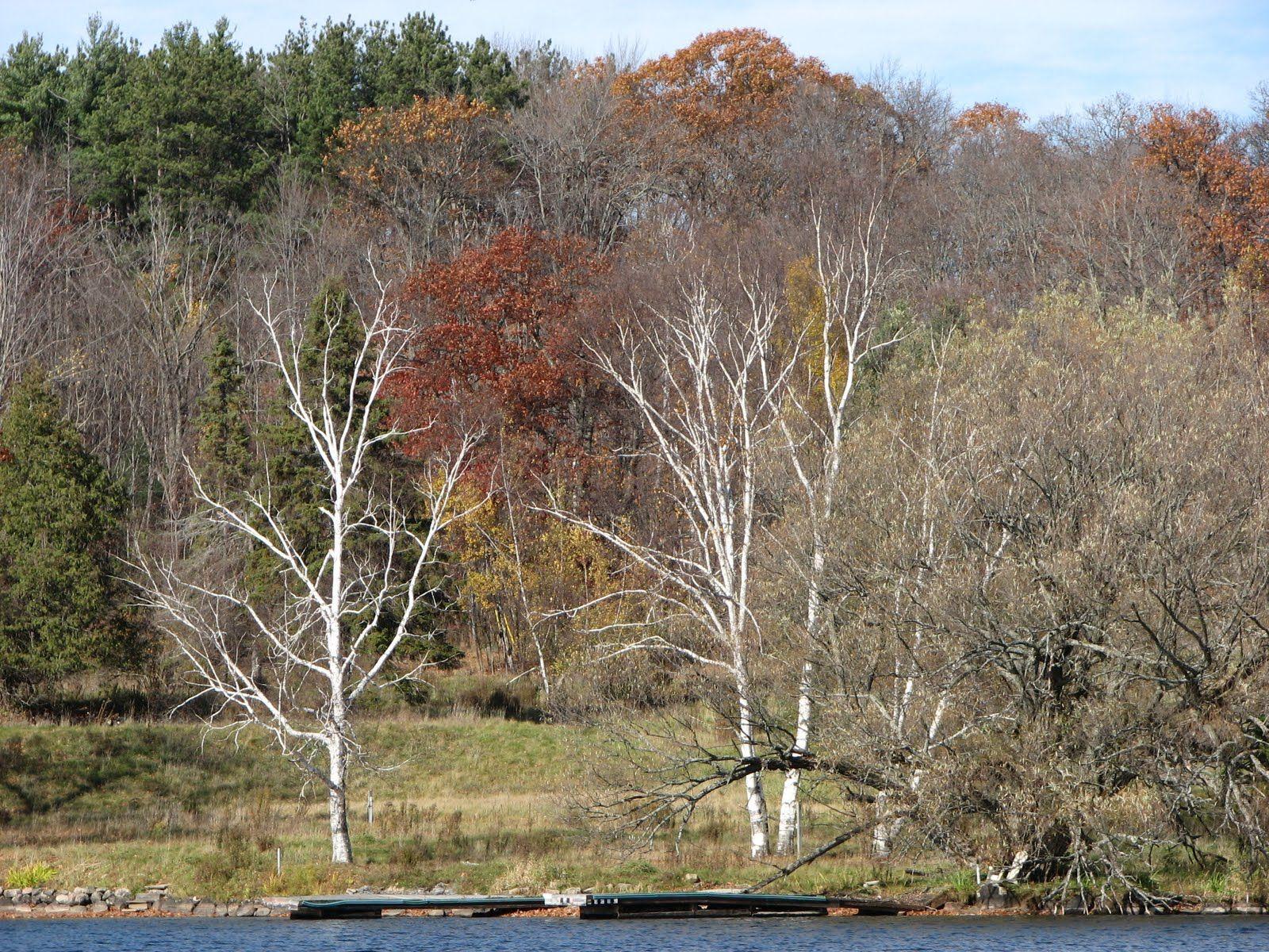 Hannaslandingjpg 16001200 tree plants garden