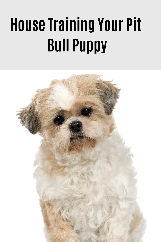 Facebook T Shirt Pitbull Training Puppies Pitbulls