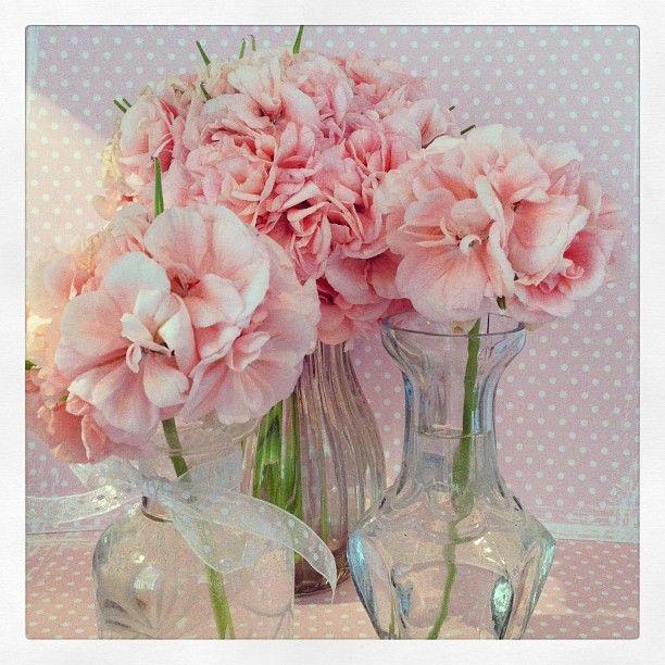 melikeflowers's photo