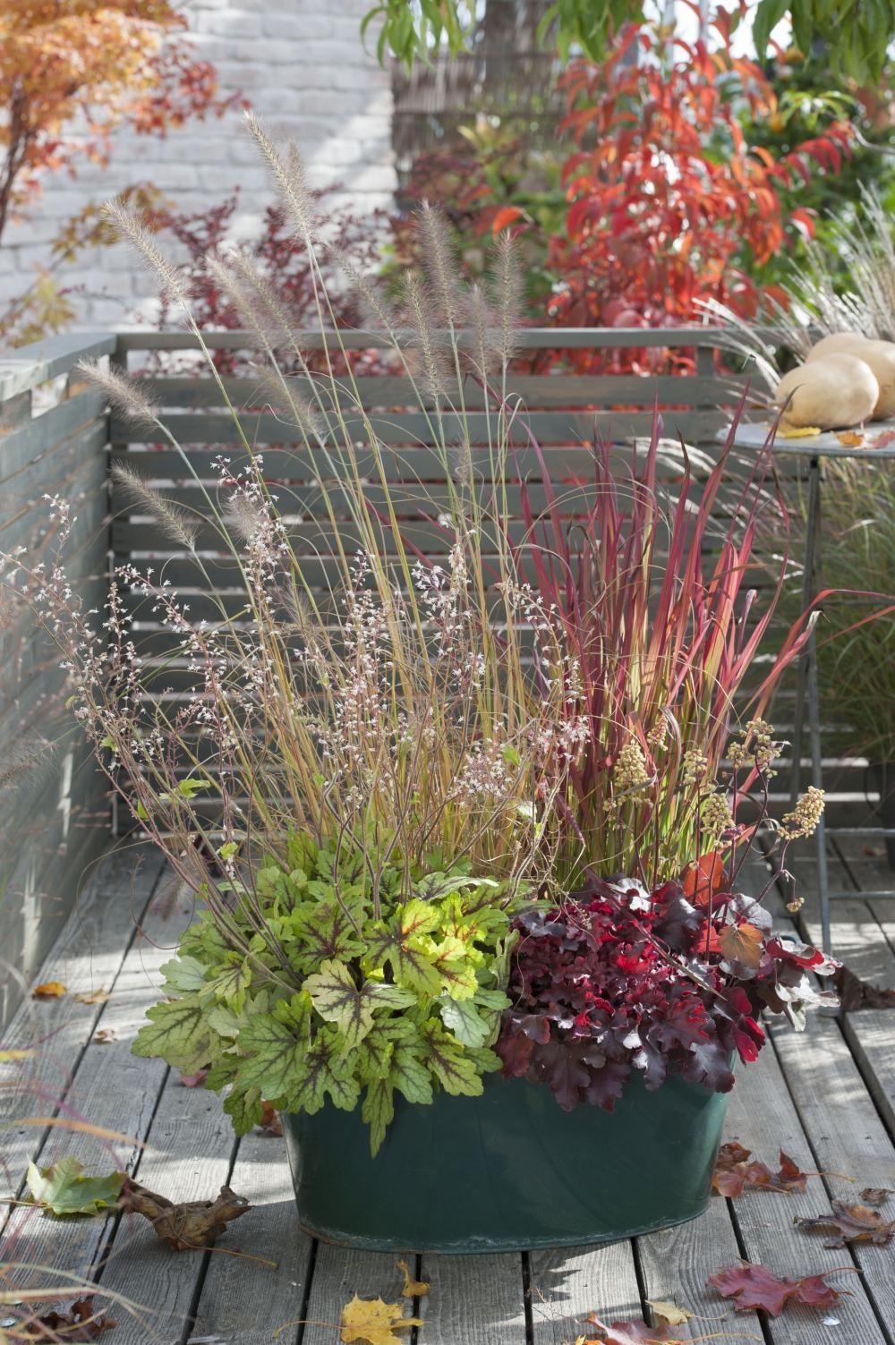 Heidelbeeren Im Kübel Pflanzen : die sch nsten k belbepflanzungen mit ziergr sern und bl tenpflanzen bepflanzung pflanzen und ~ Watch28wear.com Haus und Dekorationen