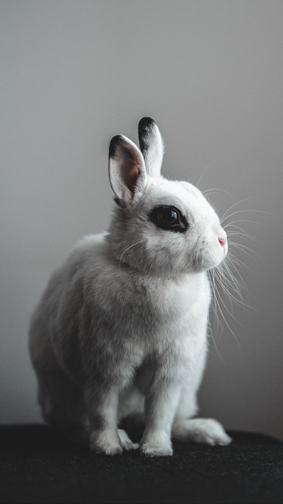 The Latest Iphone11 Iphone11 Pro Iphone 11 Pro Max Mobile Phone Hd Wallpapers Free Download Rabbit Hare White Free Wallpaper Cute Animals Animals Rabbit