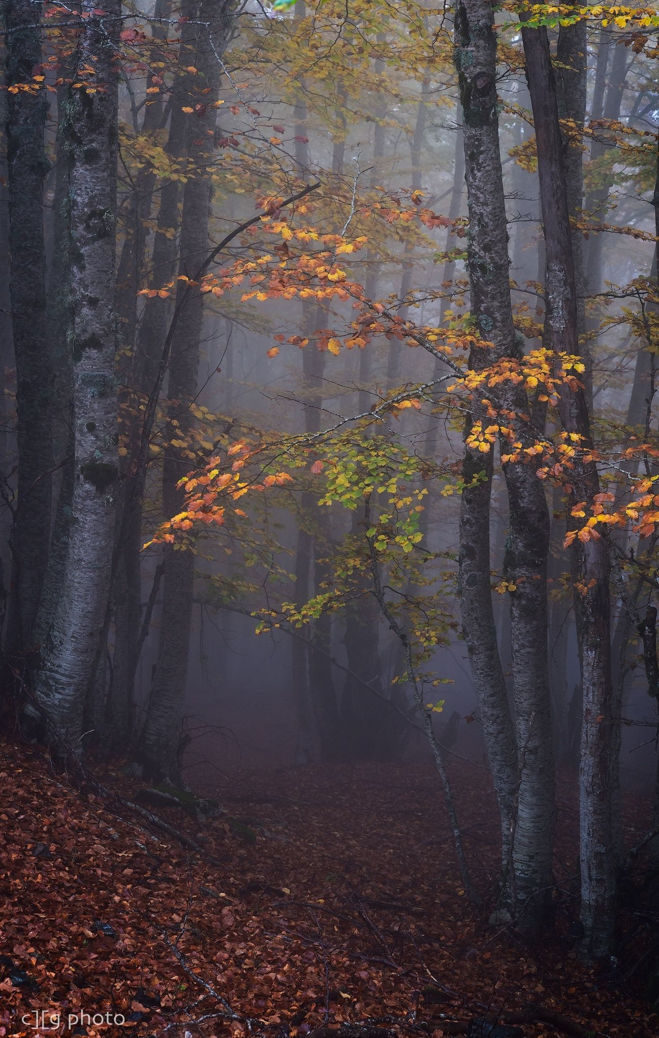 In the forest - Pindous National Park (Valia Calda)