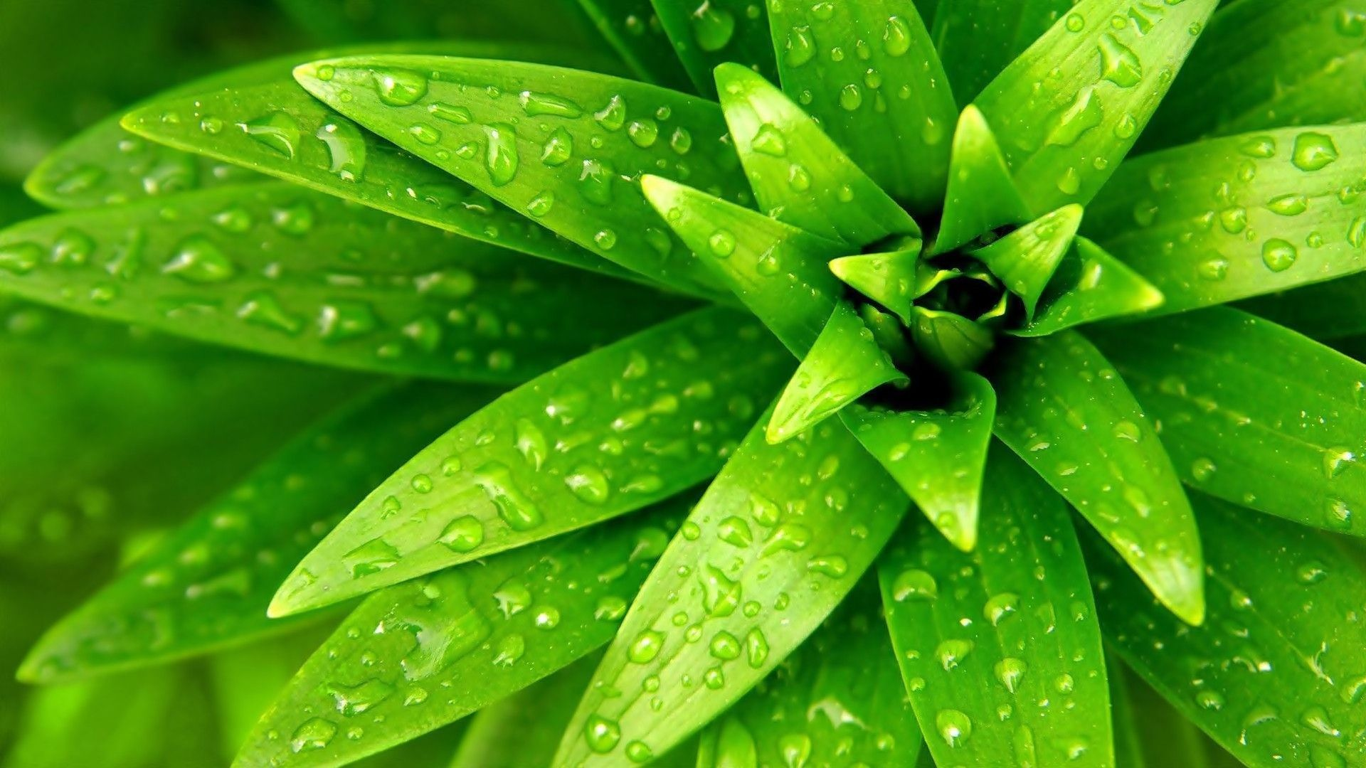35 Amazing Green Nature Wallpapers Green Nature Wallpaper Green Nature Nature Plants