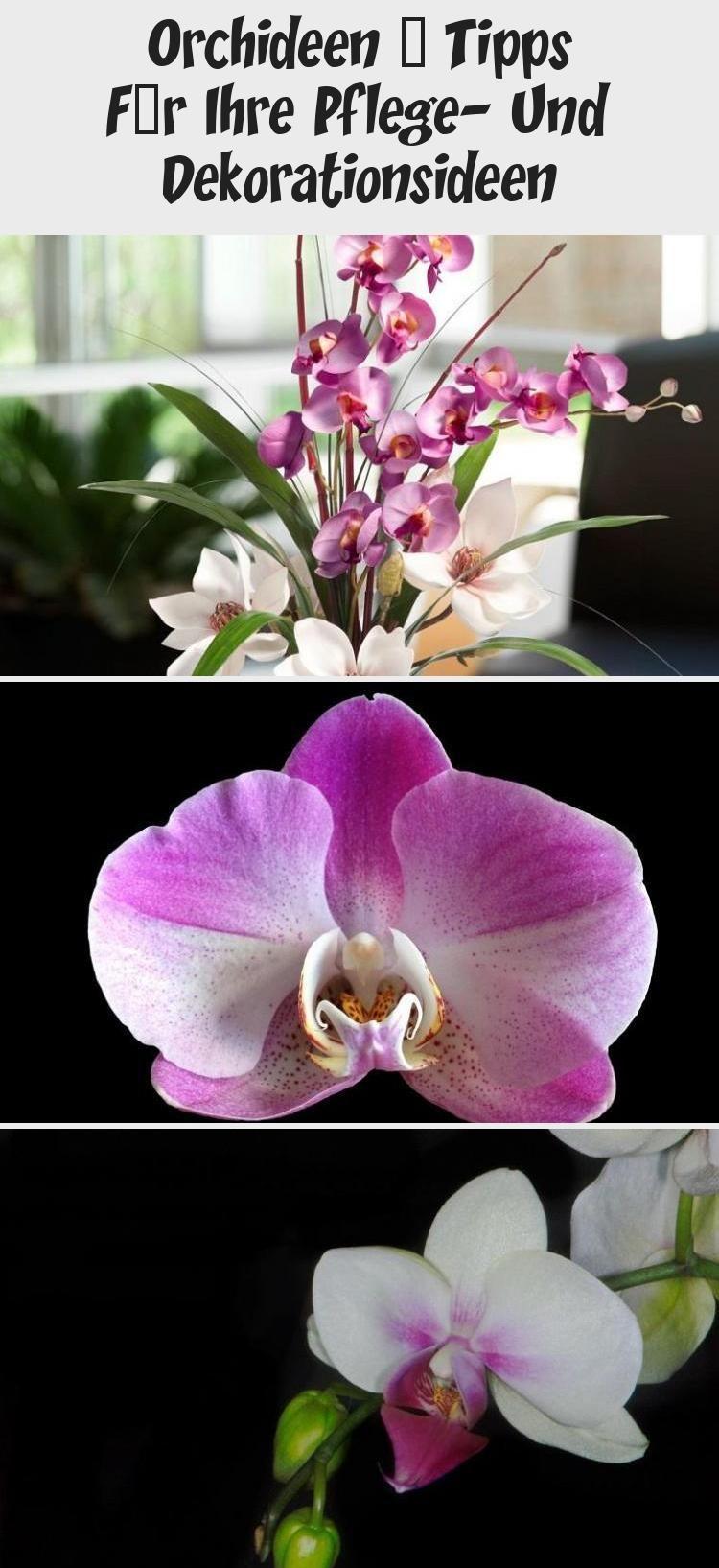 Orchideen - Tipps für Ihre Pflege- und Dekorationsideen #orchideenpflege