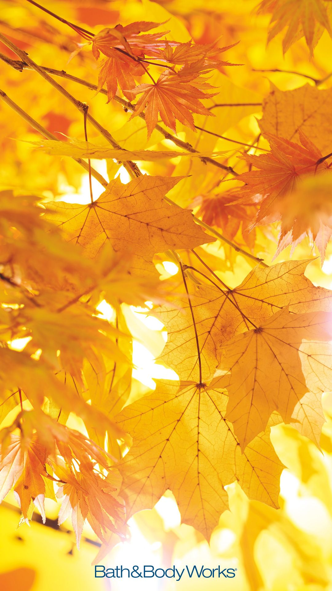 Fall Leaves Iphone Wallpaper Fall Wallpaper Autumn Leaves