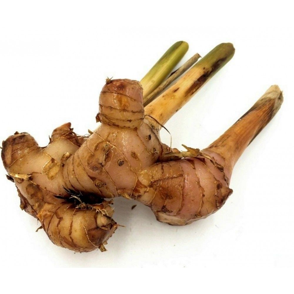 Thai Ginger Alpinia Galanga Common Name Greater Galangal Ginger Plant Seeds Ginger